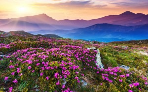 Valley Of Flowers Wallpapers