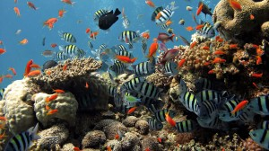 Coral Reef Under Sea Wallpapers for Desktop